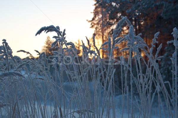 Téli tájkép fa tájkép hó szépség fehér Stock fotó © fanfo
