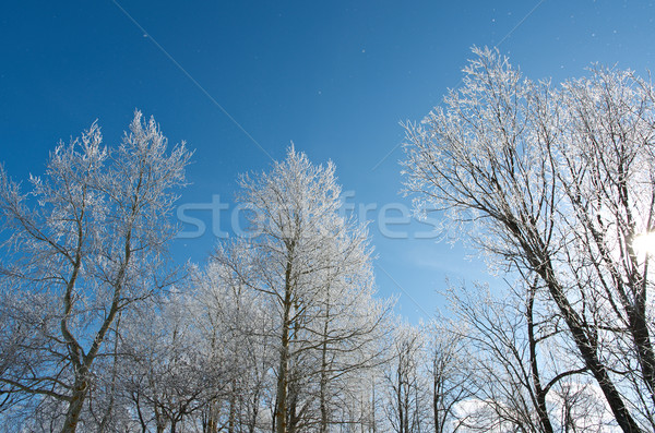 Winter landscape. frozen trees.  Stock photo © fanfo
