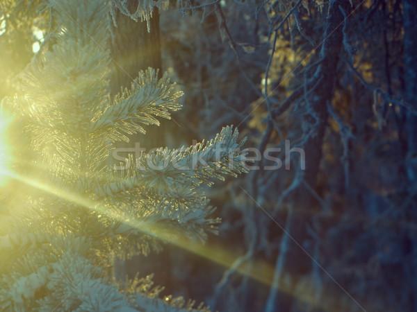 Tél tájkép égbolt virág fa erdő Stock fotó © fanfo