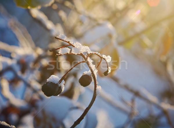 мороз трава саду фон Сток-фото © fanfo