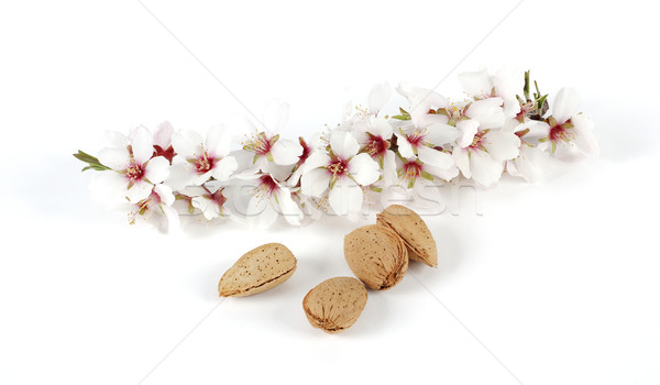 Almonds and branch Stock photo © farres
