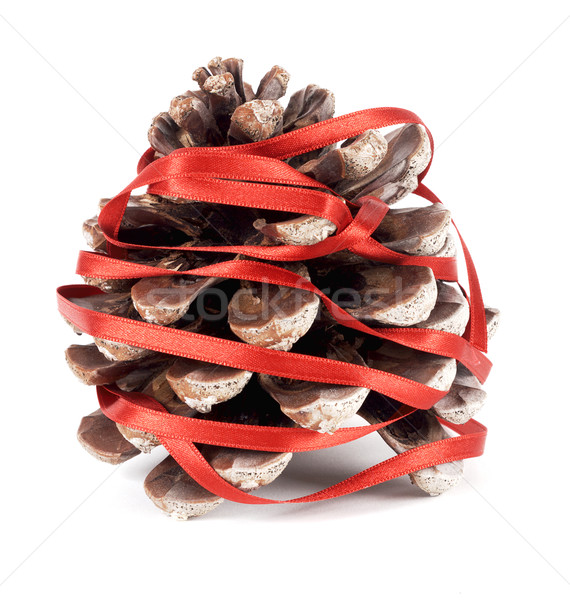 Pinecone Stock photo © farres