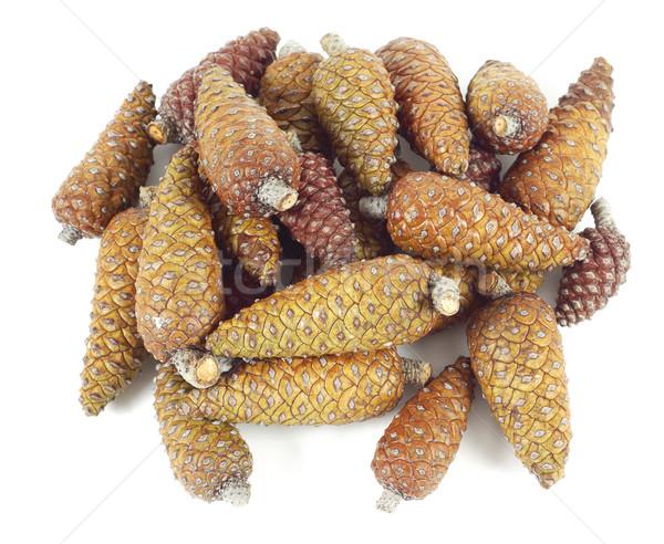 Pinecone stack Stock photo © farres