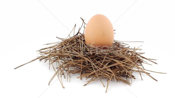 Yuva çam yaprakları tavuk yumurta kuş Stok fotoğraf © farres