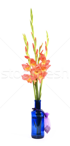 Gladiolus Branch Stock photo © farres