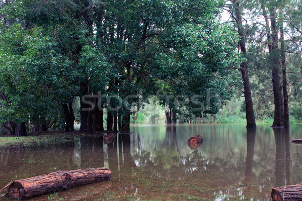 Flood Stock photo © fatalsweets