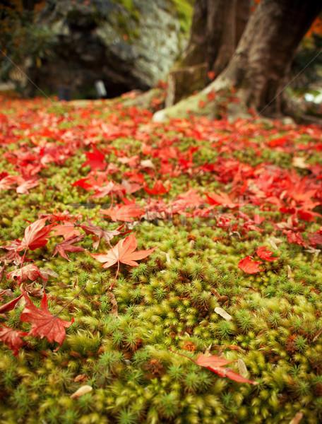 ősz levél moha 2012 Kiotó Japán Stock fotó © fatalsweets