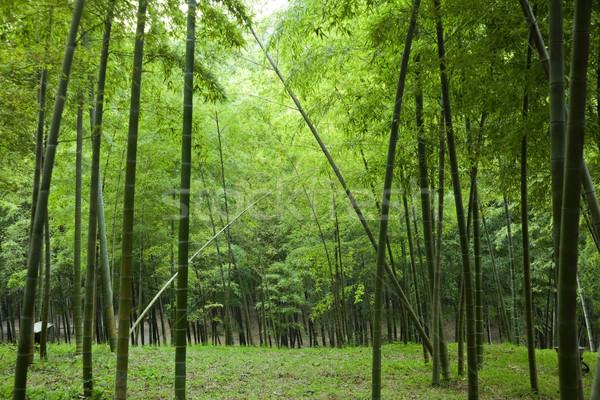 Bambusz kert fotó kínai nyár idő Stock fotó © fatalsweets
