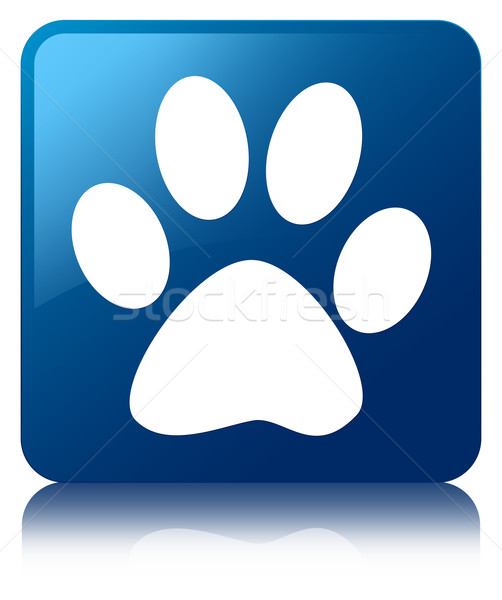 Animal footprint icon glossy blue reflected square button Stock photo © faysalfarhan