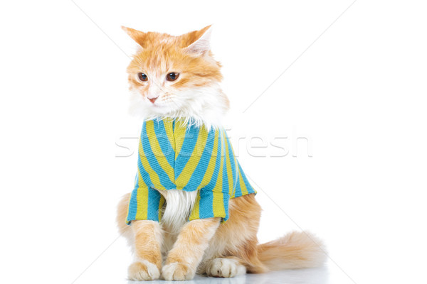 dressed cat with furry tail  Stock photo © feedough