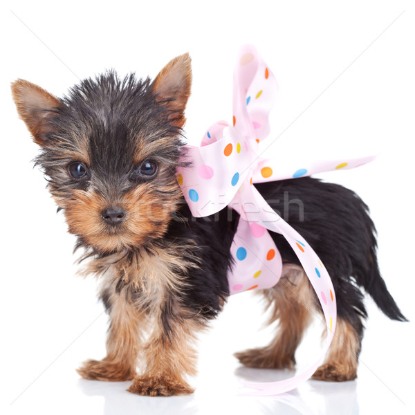 the cutest present ever Stock photo © feedough