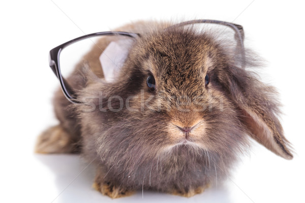 cute lion head rabbit bunny wearing glasses on his head. Stock photo © feedough