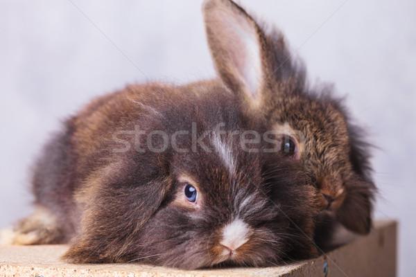 Foto d'archivio: Due · adorabile · leone · testa · coniglio · legno