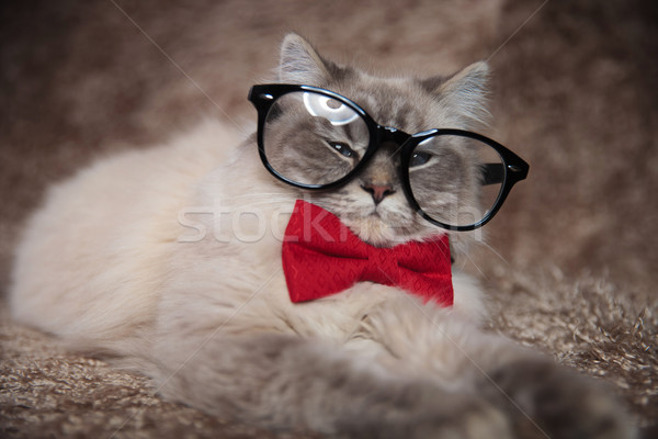 elegant adorable cat is wearing glasses and red bowtie  Stock photo © feedough