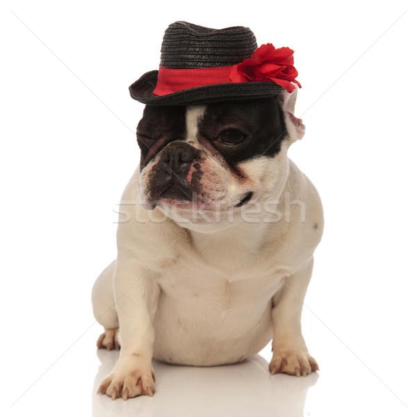 Stock fotó: Francia · bulldog · visel · fekete · kalap · kacsintás