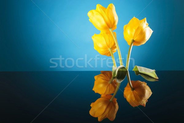 colorful image of the back of three yellow tulips Stock photo © feedough