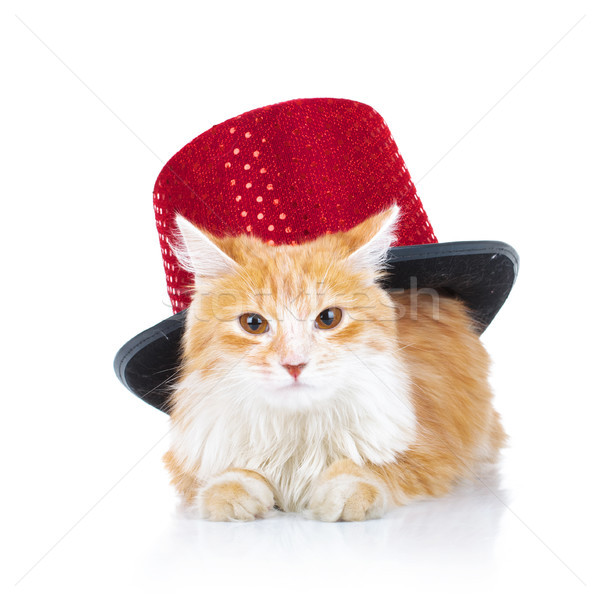 bored orange cat with a red hat Stock photo © feedough