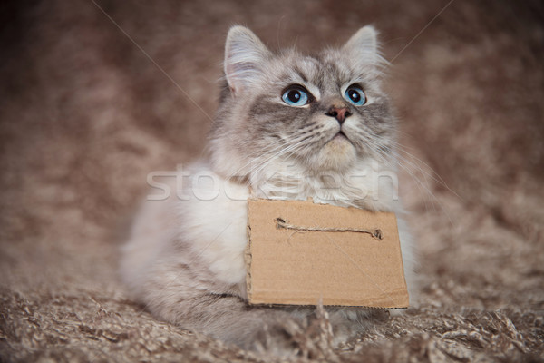 eager hungry cat wearing a sign looks up for food Stock photo © feedough