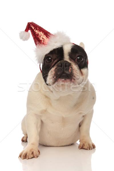 adorable french bulldog wearing a glittering santa cap Stock photo © feedough