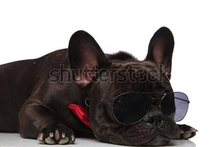 любопытный черный французский бульдог Солнцезащитные очки Сток-фото © feedough