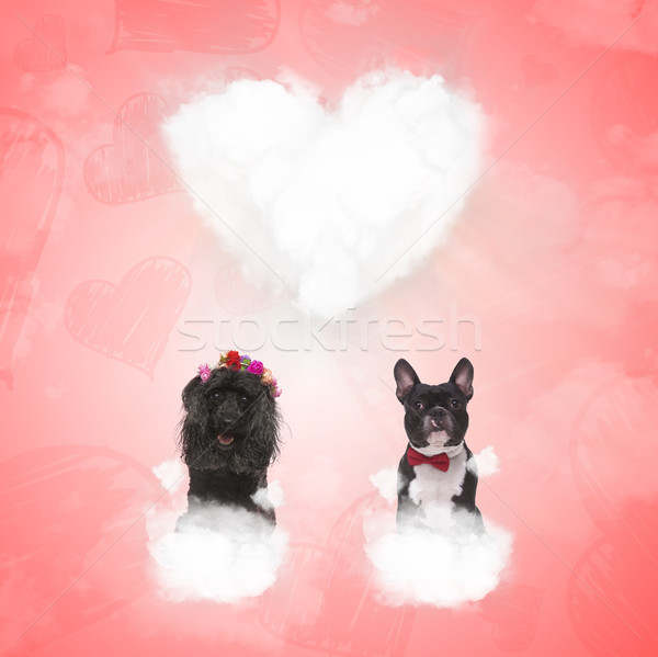 cute poodle and french bulldog sitting on love clouds  Stock photo © feedough