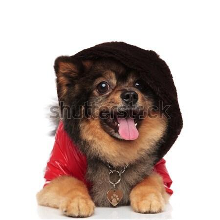 Hideg kutya barna zihálás piros kabát Stock fotó © feedough
