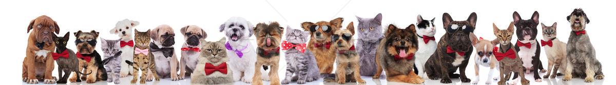 Stok fotoğraf: şık · köpekler · kediler · farklı · çok