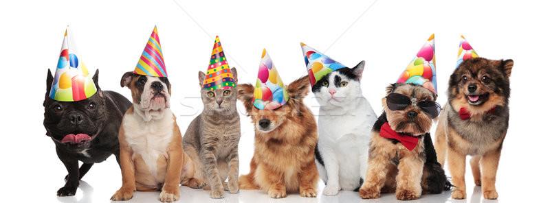 Equipe sete feliz animais de estimação colorido Foto stock © feedough