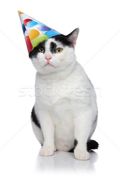 funny birthday cat with cap sliding off head Stock photo © feedough