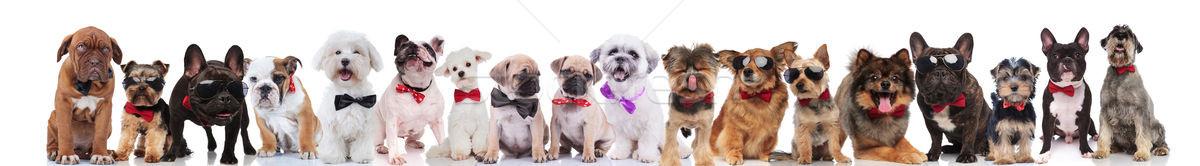 çok güzel büyük takım şık köpekler ayakta Stok fotoğraf © feedough