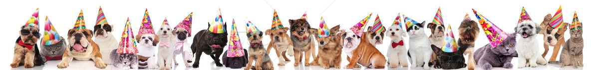 Nagyobb csoport aranyos macskák kutyák visel színes Stock fotó © feedough