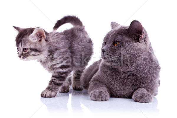 adorable cats on white background Stock photo © feedough