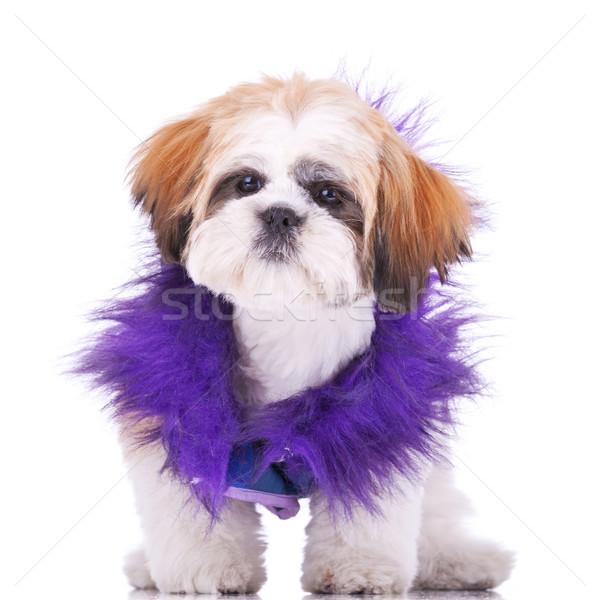 Zoete naar puppy zoals souteneur permanente Stockfoto © feedough