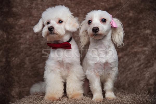 Due peloso sedersi guardare lato rosolare Foto d'archivio © feedough