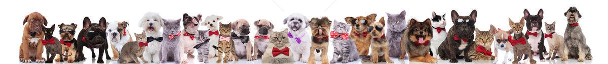 çok şık kediler köpekler güneş gözlüğü Stok fotoğraf © feedough