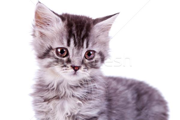 Cute ребенка серебро кошки фотография Сток-фото © feedough