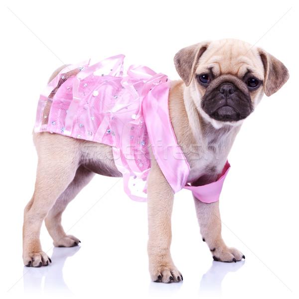 curious little puppy dog princess Stock photo © feedough