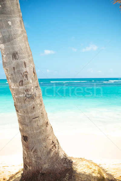 palm tree trunk and beautiful caribbean sea as background Stock photo © feedough