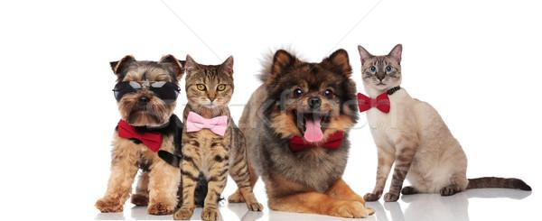 Csoport négy kutyák macskák áll ül Stock fotó © feedough