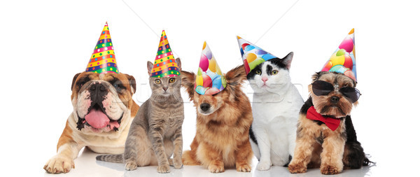 team of five cats and dogs ready for birthday party Stock photo © feedough