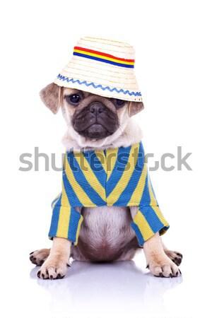 Stock fotó: Kutyakölyök · kutya · fej · aranyos · ül · portré
