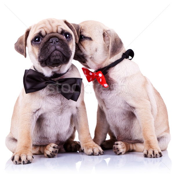 Adorable chiot chiens couple dame chuchotement Photo stock © feedough