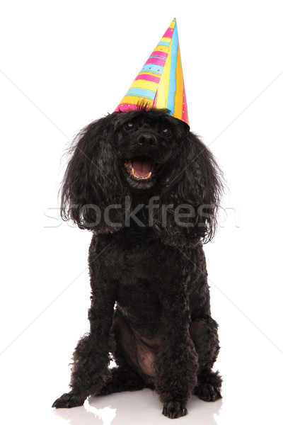 birthday dog wearing party hat looks up Stock photo © feedough