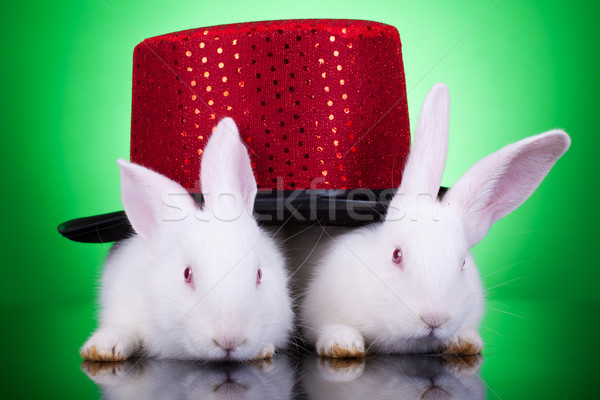 nice looking rabbits Stock photo © feedough