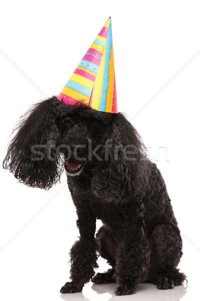 Gelukkig zwarte poedel partij hoed Stockfoto © feedough
