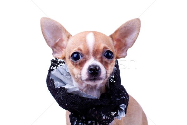 Stock fotó: Kicsi · kutyakölyök · visel · ruha · közelkép · baba