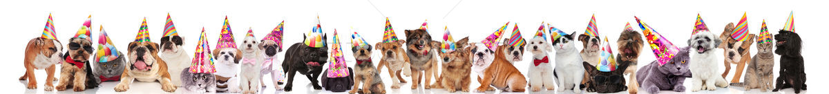 many adorable cats and dogs ready for birthday party Stock photo © feedough