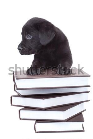 Labrador retriever áll mancsok köteg könyvek aranyos Stock fotó © feedough