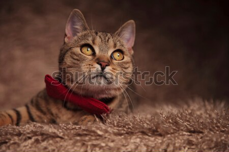evil elegant cat wearing devil horns  Stock photo © feedough