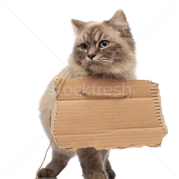 Bedelaar kat lopen naar kant lege Stockfoto © feedough